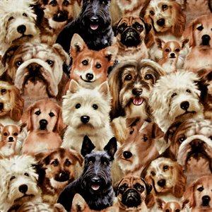 Petpourri - Dogs