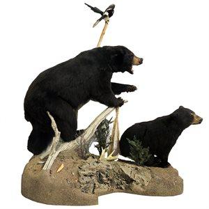Life Size Black Bear Mount