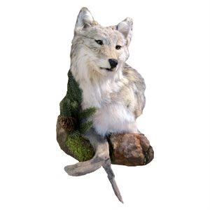 Coyote - Shoulder Mount