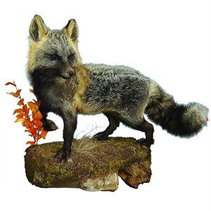 Cross Fox - Full Mount