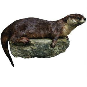Otter - Full Mount