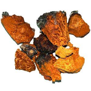Chaga Mushroom (1oz / Package)