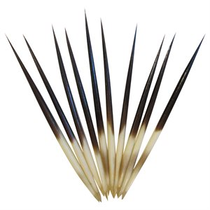African Porcupine Quills - (10 Pieces)