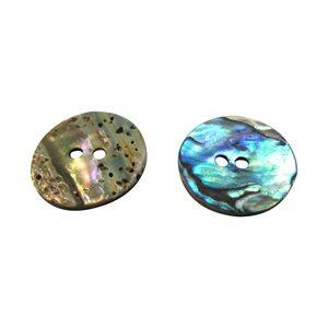 Paua Shell - 20 mm